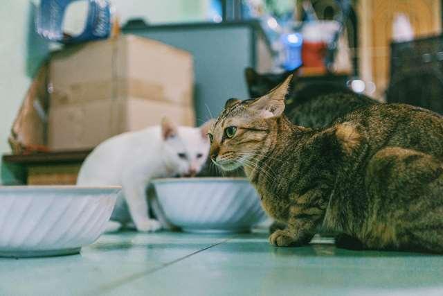 Подборка фото с котиками. Милые создания. lublusebya-lublusebya-52201227042019-16 картинка lublusebya-52201227042019-16