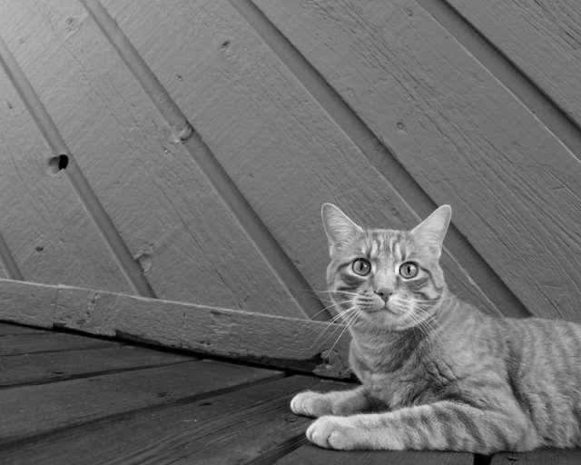 Подборка фото с котиками. Милые создания. lublusebya-lublusebya-52201227042019-18 картинка lublusebya-52201227042019-18