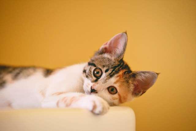 Подборка фото с котиками. Милые создания. lublusebya-lublusebya-52201227042019-3 картинка lublusebya-52201227042019-3