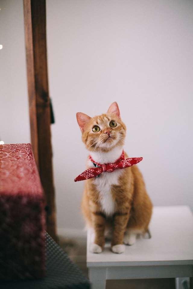 Подборка фото с котиками. Милые создания. lublusebya-lublusebya-52201227042019-4 картинка lublusebya-52201227042019-4