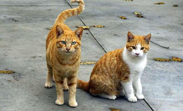 Подборка фото с котиками. Милые создания. lublusebya-lublusebya-52201227042019-8 картинка lublusebya-52201227042019-8