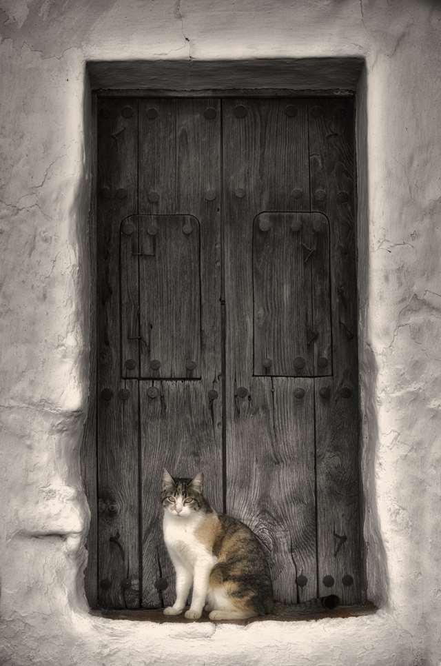 Подборка фото с котиками. Милые создания. lublusebya-lublusebya-52201227042019-9 картинка lublusebya-52201227042019-9