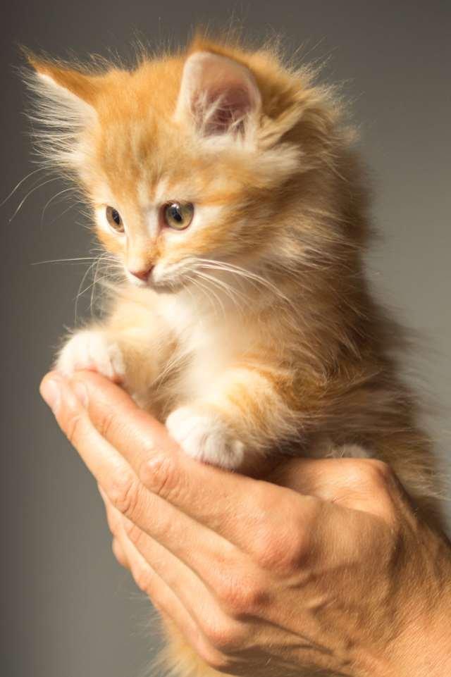 Подборка фото с котиками. Милые создания. lublusebya-lublusebya-55331227042019-0 картинка lublusebya-55331227042019-0