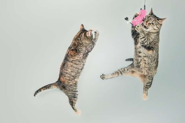 Подборка фото с котиками. Милые создания. lublusebya-lublusebya-55331227042019-1 картинка lublusebya-55331227042019-1