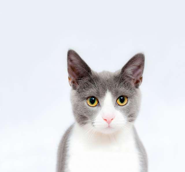 Подборка фото с котиками. Милые создания. lublusebya-lublusebya-55331227042019-11 картинка lublusebya-55331227042019-11