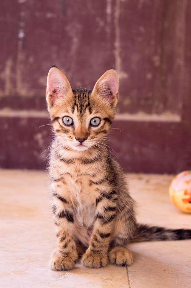 Подборка фото с котиками. Милые создания. lublusebya-lublusebya-55331227042019-13 картинка lublusebya-55331227042019-13