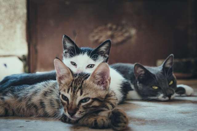 Подборка фото с котиками. Милые создания. lublusebya-lublusebya-55331227042019-17 картинка lublusebya-55331227042019-17