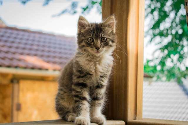 Подборка фото с котиками. Милые создания. lublusebya-lublusebya-55331227042019-3 картинка lublusebya-55331227042019-3