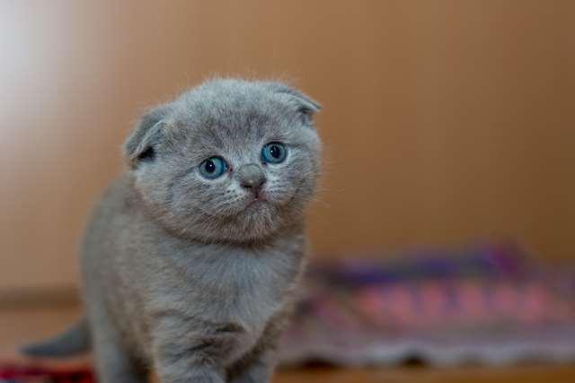 Подборка фото с котиками. Милые создания. lublusebya-lublusebya-55331227042019-4 картинка lublusebya-55331227042019-4