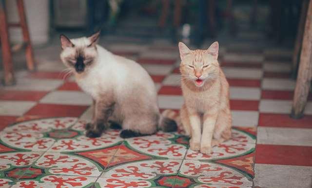Подборка фото с котиками. Милые создания. lublusebya-lublusebya-59321227042019-0 картинка lublusebya-59321227042019-0