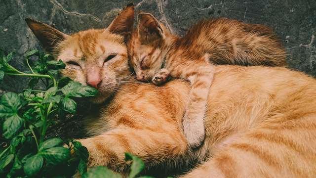 Подборка фото с котиками. Милые создания. lublusebya-lublusebya-59321227042019-1 картинка lublusebya-59321227042019-1