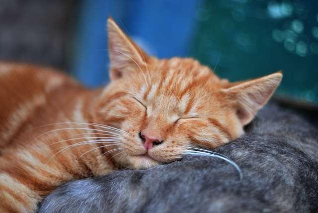Подборка фото с котиками. Милые создания. lublusebya-lublusebya-59321227042019-11 картинка lublusebya-59321227042019-11