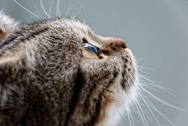 Подборка фото с котиками. Милые создания. lublusebya-lublusebya-59321227042019-13 картинка lublusebya-59321227042019-13