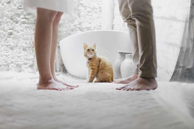 Подборка фото с котиками. Милые создания. lublusebya-lublusebya-59321227042019-16 картинка lublusebya-59321227042019-16