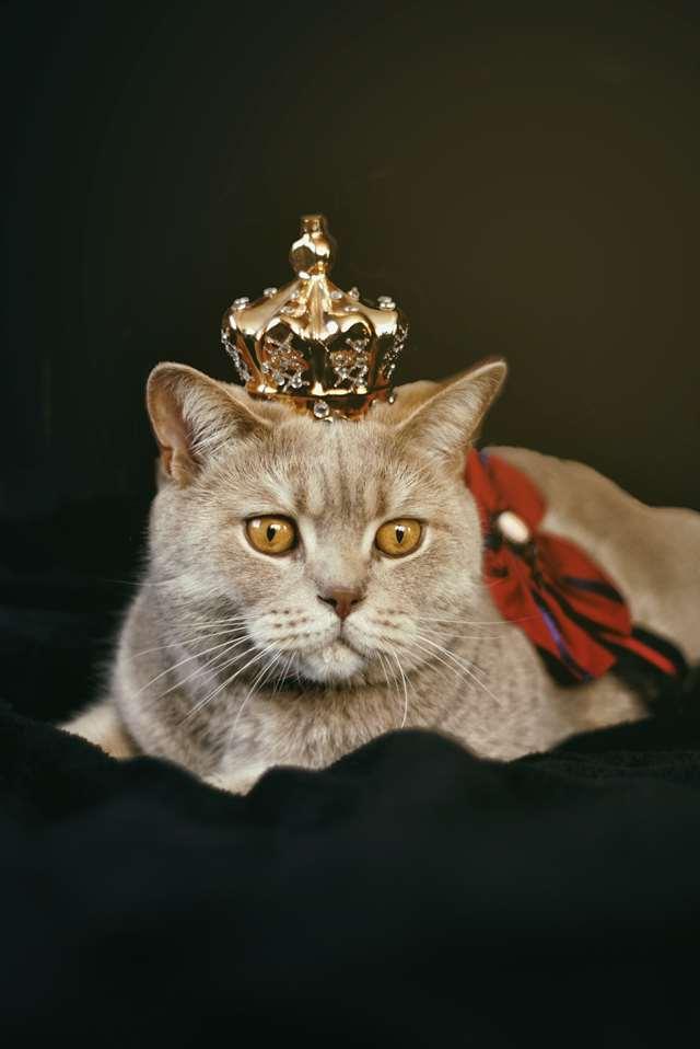 Подборка фото с котиками. Милые создания. lublusebya-lublusebya-59321227042019-3 картинка lublusebya-59321227042019-3