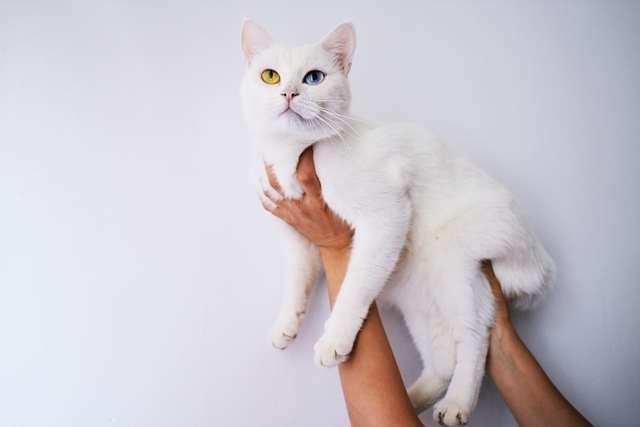 Подборка фото с котиками. Милые создания. lublusebya-lublusebya-59321227042019-5 картинка lublusebya-59321227042019-5
