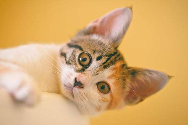 Подборка фото с котиками. Милые создания. lublusebya-lublusebya-59321227042019-6 картинка lublusebya-59321227042019-6