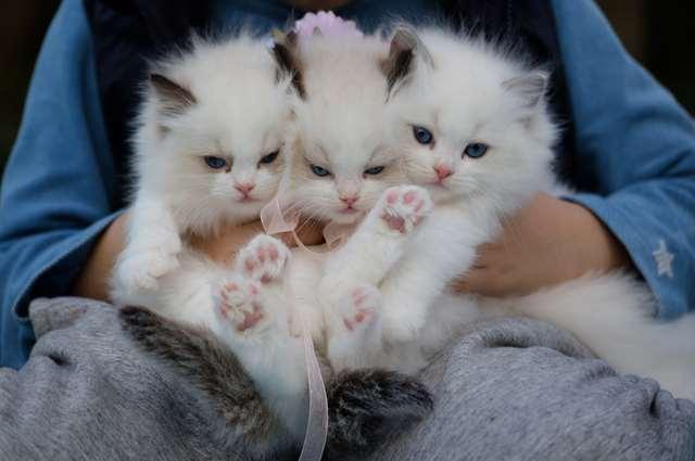 Подборка фото с котиками. Милые создания. lublusebya-lublusebya-59321227042019-9 картинка lublusebya-59321227042019-9