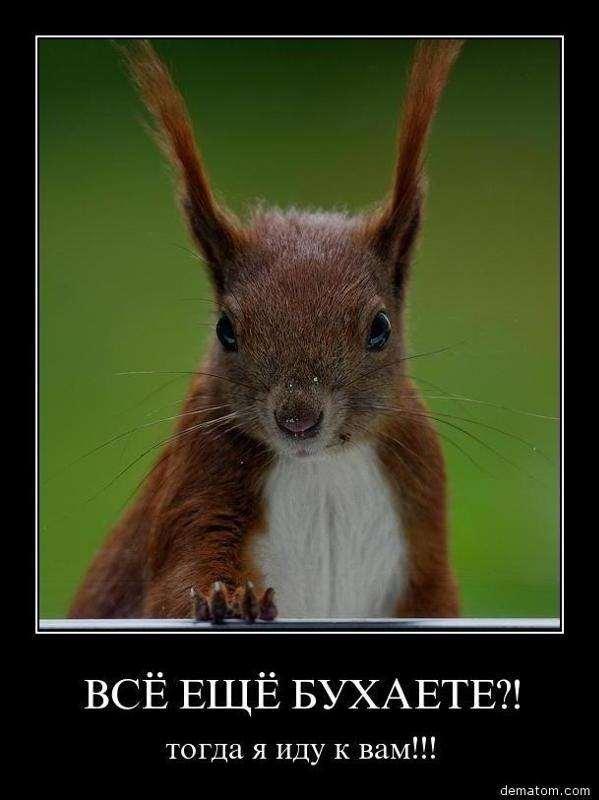 Нежный юмор для девушек и женщин. Подборка картинок и фото lublusebya-lublusebya-59340510052019-14 картинка lublusebya-59340510052019-14