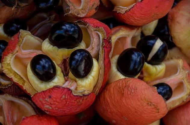 8 популярных продуктов, признанных самыми опасными в мире