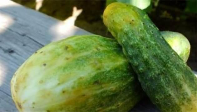 Как не оказаться обманутым при выборе фруктов и овощей на рынке