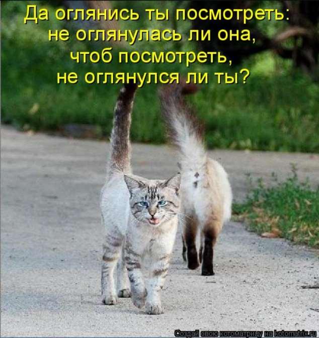 Нежный юмор для девушек и женщин. Подборка картинок и фото lublusebya-lublusebya-46090107112019-0 картинка lublusebya-46090107112019-0