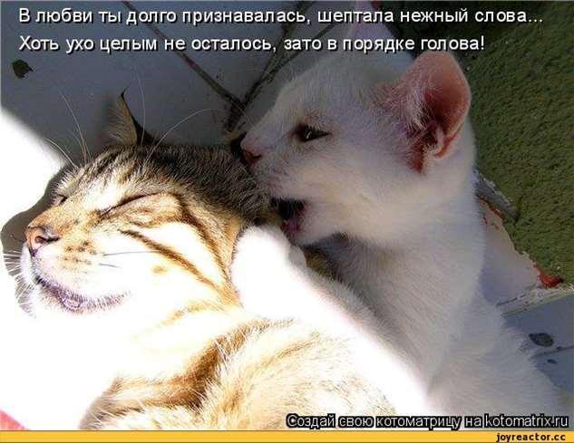 Нежный юмор для девушек и женщин. Подборка картинок и фото lublusebya-lublusebya-46090107112019-14 картинка lublusebya-46090107112019-14