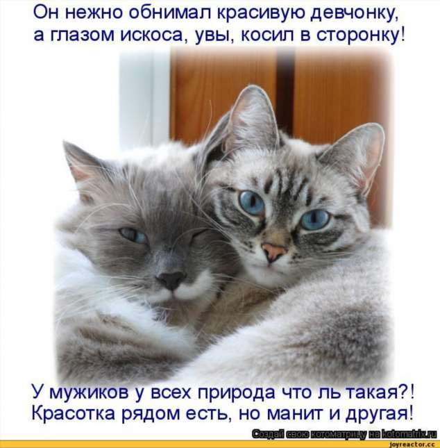 Нежный юмор для девушек и женщин. Подборка картинок и фото lublusebya-lublusebya-46090107112019-18 картинка lublusebya-46090107112019-18