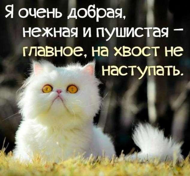 Нежный юмор для девушек и женщин. Подборка картинок и фото lublusebya-lublusebya-46090107112019-2 картинка lublusebya-46090107112019-2