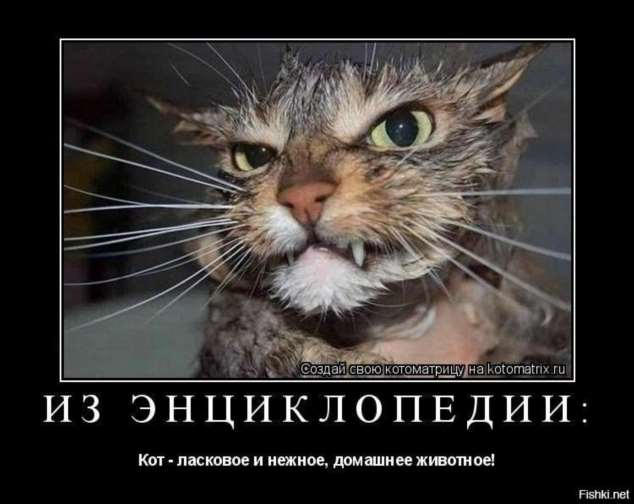 Нежный юмор для девушек и женщин. Подборка картинок и фото lublusebya-lublusebya-46090107112019-4 картинка lublusebya-46090107112019-4