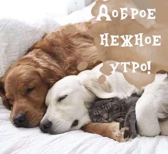 Нежный юмор для девушек и женщин. Подборка картинок и фото lublusebya-lublusebya-25170510052020-9 картинка lublusebya-25170510052020-9